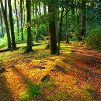 Scholieren Eijkhagen gaan bomen planten (De Limburger)